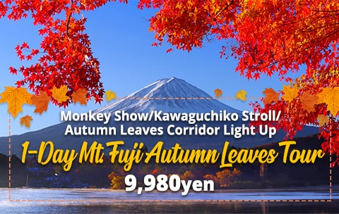 1 Day Mt.Fuji Autumn Leaves Tour