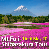 Tour to admire thoroughly Mt. Fuji and Shibazakura