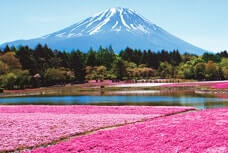 1-Day Tour to admire thoroughly Mt. Fuji and Shibazakura
